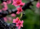 一份来着大自然的馈赠-春季的条达,女神们,请及时签收!
